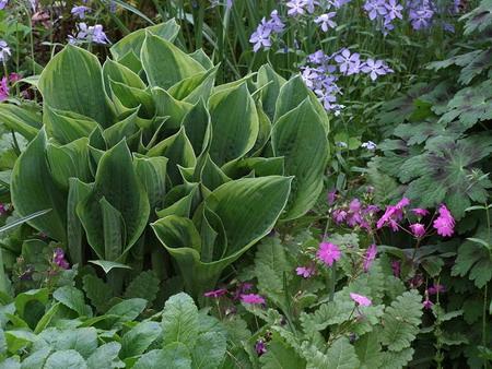 Perennial Flowers and Plants in your Garden  Flower Garden